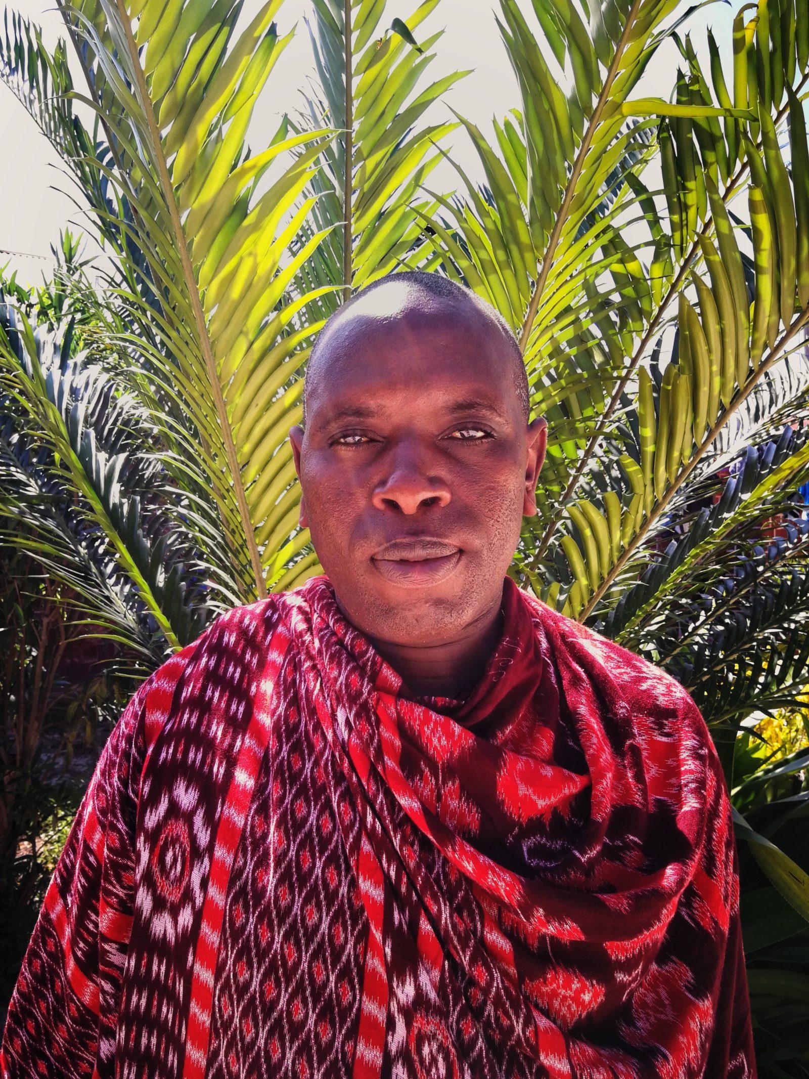 I masaiernes kultur kan køer betyde lykke eller død